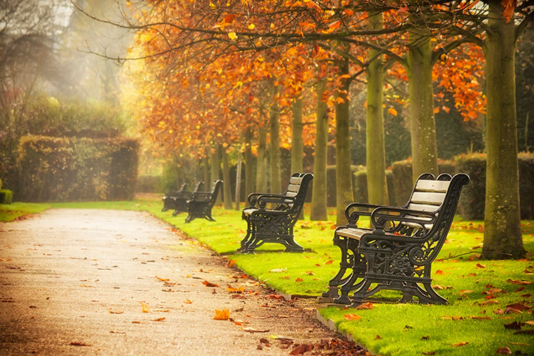 Benches-in-autumn-park2
